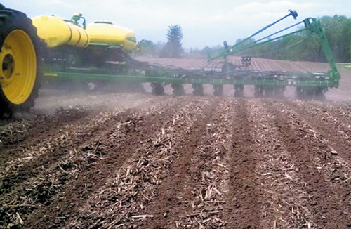 Rows planted in a strip-tilled field with precision accuracy